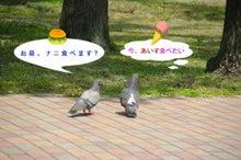 毎日はっぴぃ気分☆-鳩カップルの会話(笑)
