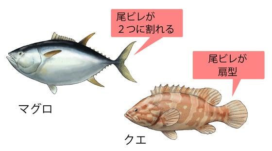 川崎悟司 オフィシャルブログ 古世界の住人 Powered by Ameba-マグロとクエ