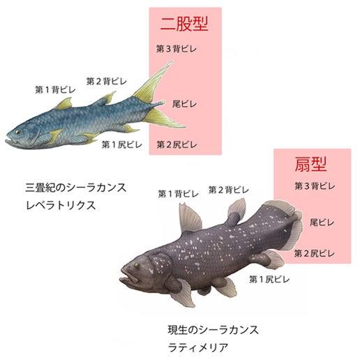川崎悟司 オフィシャルブログ 古世界の住人 Powered by Ameba-ラティメリアとレベラトリクス