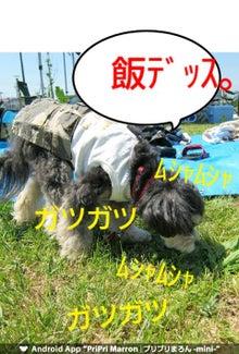 主水(チワプー)&りつ(マルチーズ)のハマライフ-1336963682218.jpg