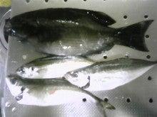 瀬戸内海の釣り&ゴルフ