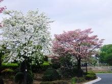 毎日お疲れ-花のまち館林007