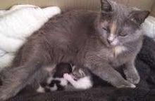 ずれずれブログ…湘南で猫と暮らせば…-グラフィック0515001.jpg