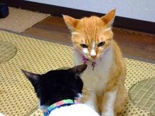 ペットと飼い主さんの為の療法院-fg