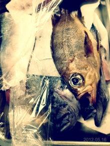 肥後橋・自然派バルBar Pikoのブログ