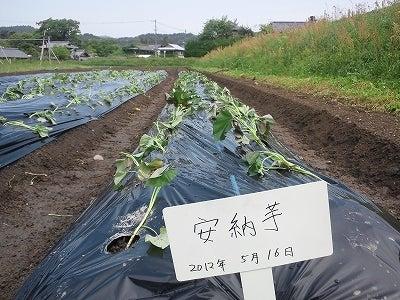 能勢野菜直売の古嶋商店