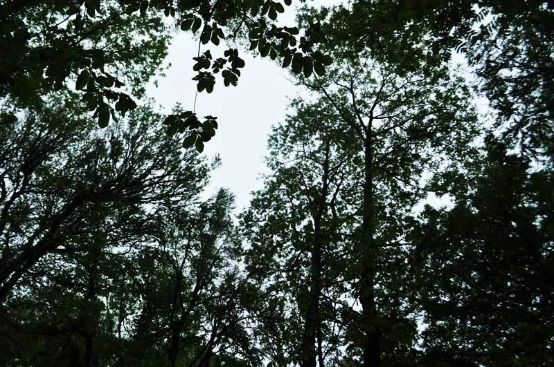 $白神山地ツアーの白神なびスタッフブログ-2012年5月中旬の白神山地「雨の十二湖」7