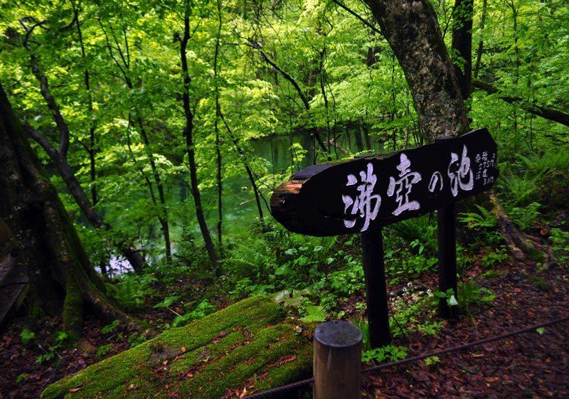 $白神山地ツアーの白神なびスタッフブログ-2012年5月中旬の白神山地「雨の十二湖」8