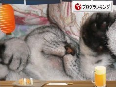 猫多頭飼い 人気ブログランキング