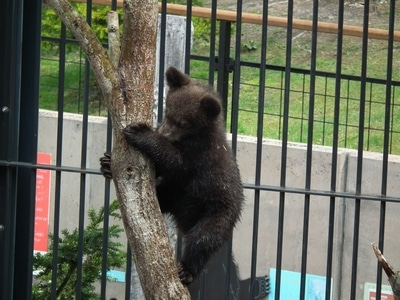 もっともっと!zooっと旭山動物園