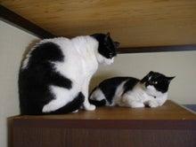 ペットと飼い主さんの為の療法院-きき