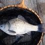 ヘラブナ釣りなら西湖…