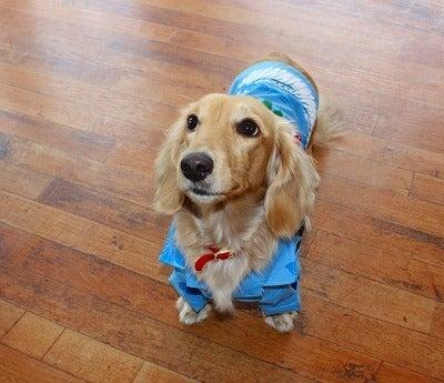 macdogのブログ