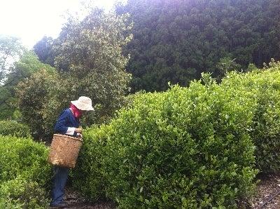 愛知県無農薬野菜づくり~竹内農園~知多半島有機農業日記