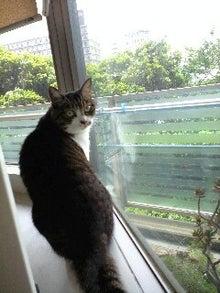 ずれずれブログ…湘南で猫と暮らせば…-120521_0954~0001.jpg
