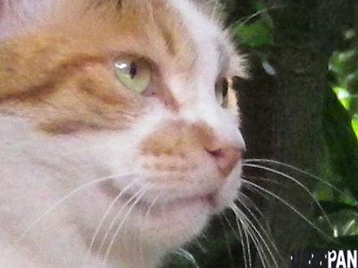 猫画像ブログ 野良猫の気持ち