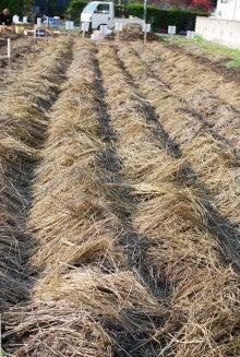 $いただきます青森のブログ-農作業4