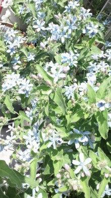 凛と空に咲く-2012052312170000.jpg