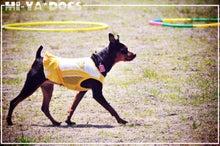 mi-ya*dogs
