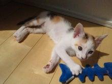 PFL★MIKIのブログ-2012052413210002.jpg