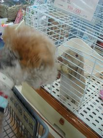 nano(ナノ) てくてく-垂れ耳ウサギさん & nano