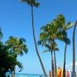 ハワイより帰国、そし…