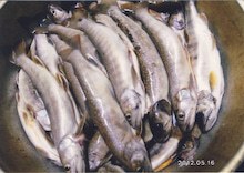 杣おやじのつぶやき-天然岩魚