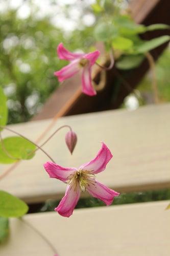 $Vagabondage&Flowers