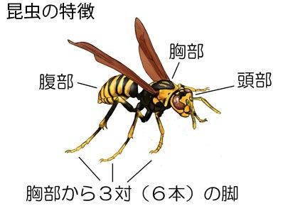 川崎悟司 オフィシャルブログ 古世界の住人 Powered by Ameba-昆虫の特徴