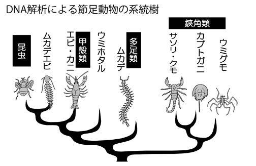 川崎悟司 オフィシャルブログ 古世界の住人 Powered by Ameba-DNA解析による節足動物の系統図