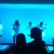 K-POPダンスと人…