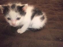 溺愛猫のツレヅレ猫日記-120527_163559.jpg
