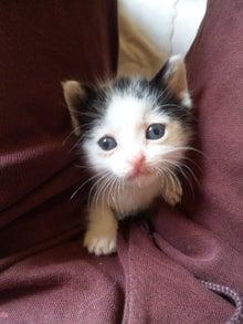 溺愛猫のツレヅレ猫日記-120527_131905.jpg