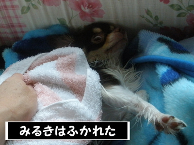 なめらかチワワ-RPG04