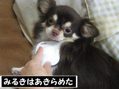 なめらかチワワ-RPG10