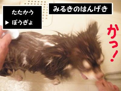 なめらかチワワ-RPG03
