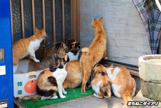まちねこダイアリ presented by どうぶつZOO館-湯島の猫