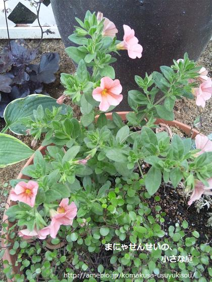 まにゃせんせいの、小さな庭-フラミンゴうにょん