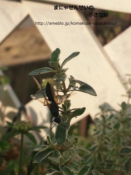 まにゃせんせいの、小さな庭-女王アリの羽