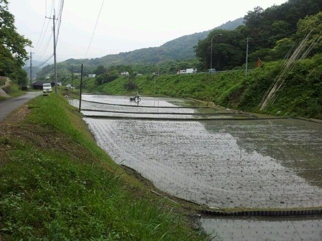 歩き人ふみの徒歩世界旅行 日本・台湾編-田植え