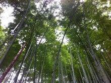 東京・森の学校 スタッフブログ-竹林