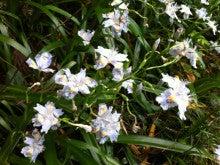 東京・森の学校 スタッフブログ-フィールドに咲く花②