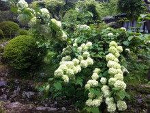 東京・森の学校 スタッフブログ-フィールドに咲く花①