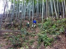 東京・森の学校 スタッフブログ-竹の子採り