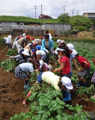 かもの子農園でボランティアしよう♪-芋掘り02