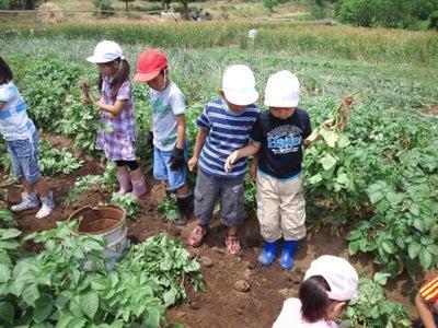 かもの子農園でボランティアしよう♪-芋掘り03