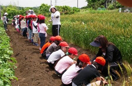 かもの子農園でボランティアしよう♪-植付け01