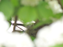 北海道の野生動植物写真-抱卵