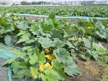 神奈川県 三浦市 伊藤農園のブログ-2012060308420000.jpg