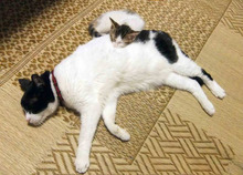 ペットと飼い主さんの為の療法院